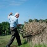 rye_harvest-patterson