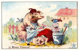 cochon mort 8